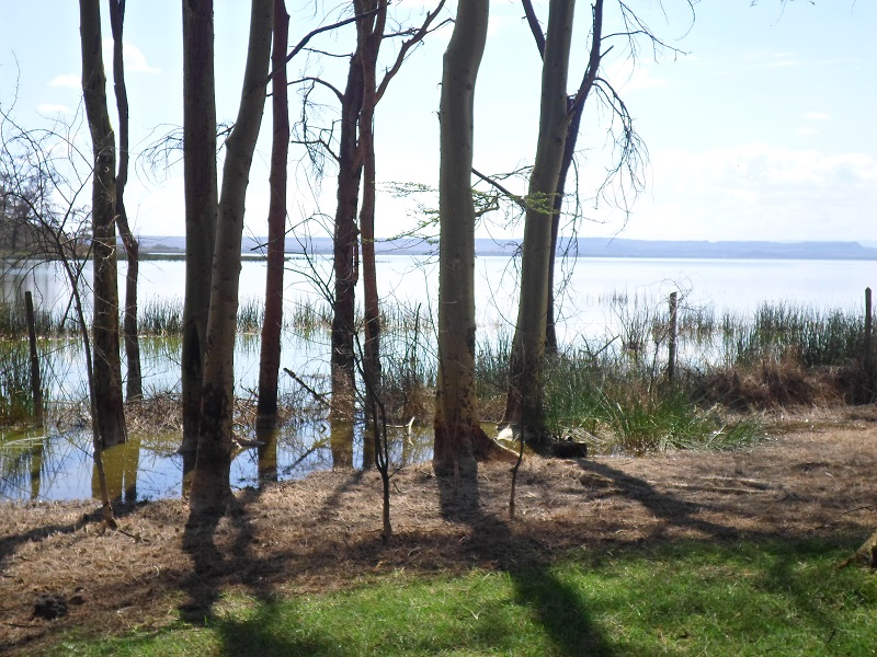Oasis picnic grounds(lakeview)